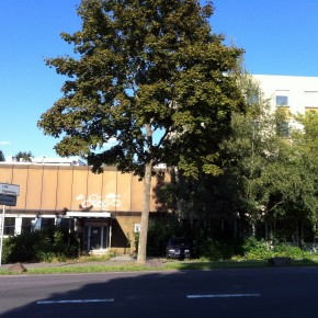 Stadtratsbeschluss verpasst Dudweiler Nahversorgung den Sargnagel