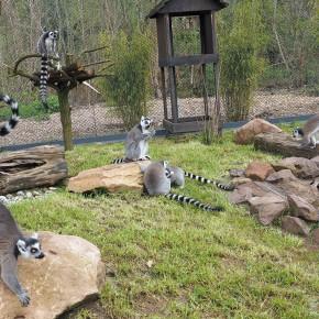 Neue Anlagen im Saarbrücker Zoo eingeweiht