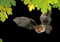 Saarbrücker Zoo – Wintervortragsreihe: Natur vor der Haustür und Welt der Fledermäuse