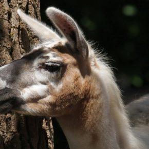 Saarbrücker Zoo – Erlebnisnachmittag am Fastnachtsdienstag