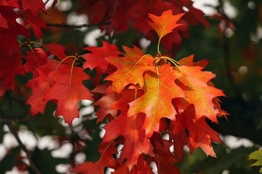 Laub Herbst