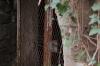 Suchbild Nummer_20: Eingang zum Bunker im Hinterhof der Glückauf-Apotheke