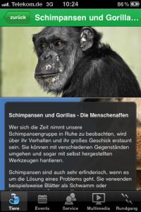 Zoo-App Infoseite zu Schimpansen (Foto: Landeshauptstadt Saarbrücken)